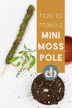 Help your plants to grow big and strong by staking them on a moss pole. With just a few supplies and a couple of bucks, you can learn how to make a mini moss pole! #houseplants #mosspoles