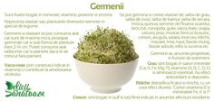 Sprouts @DeliciiSanatoas Parsley, Kale, Quinoa, Sprouts, Broccoli, Herbs, Food, Collard Greens, Eten