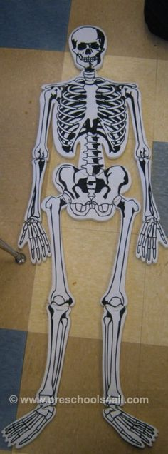 Human Body Lesson Plans and    Five Senses Activities