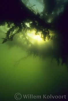 Onderwaterfotografie van Willem Kolvoort, Prachtig!