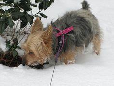 Mmmm... snow! - Taken by Kristie Zapf