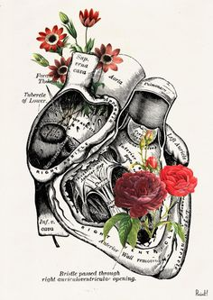 Flowery heart white art Print A4 Wall art. Human anatomy by PRRINT