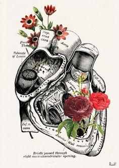 Flowery Heart human Anatomy Print on dictionary page -Love gift - Anatomy art… Human Anatomy Art, Anatomy Study, Heart Anatomy Drawing, Male Figure Drawing, Love Wall Art, Medical Art, Art Prints For Sale, Science Art, Pics Art
