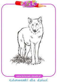 Wilk - Kolorowanki zwierzęta