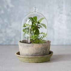 Earth Fired Clay Cloche Set