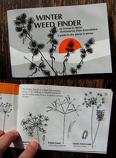 Nature Study: Winter Weeds