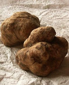 white truffle. Extremely expensive. We have to go to Alba and eat one! dada