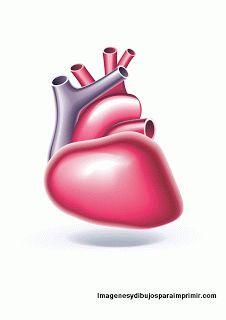 Organos cuerpo humano para imprimir cuerpo humano for Interior del cuerpo humano