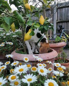 Lemons and Olive 🌸 Emma Johnston, Plants, Instagram, Plant, Planets