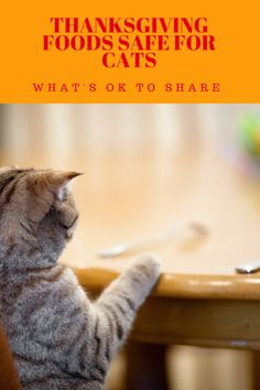 thanksgiving foods safe for cats, learn what's ok to share with your cat this holiday #cats #thanksgiving and cats #cat safe thanksgiving foods #cat health