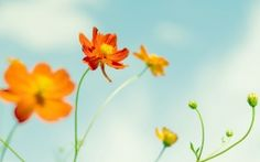 I love how the orange flowers and blue sky compliment each other!