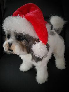 furred dog shih tzu ooak hand made Shih Tzu, Art World, Fairytale, Fur, Fantasy, Dolls, Handmade, Animals, Fairy Tail