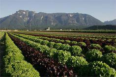 Wals ist der perfekte Ort, um frisches Gemüse und Obst anzupflanzen. Unsere Bauern geben sich beste Mühe!