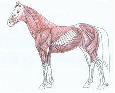 Horse Tattoo Drawing   Tattoobite.com
