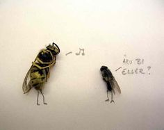 Are You a Bee? Dead Fly Art by Magnus Muhr