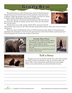 Worksheets: Grizzly Bear Facts