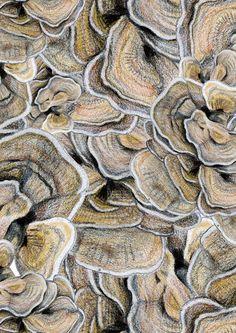 motif champignons d'arbre, 2013