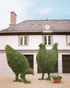 Larger-than-life boxwood chickens
