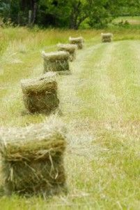 Judging Hay Quality for Horses