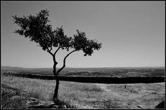 [2012 - Marialva - Portugal] #natureza #naturaleza #nature #fotografia #photography #foto #photo #europa #europe #paisajem #paisajens #paisaje #paisajes #landscape #landscapes #arvore #arvores #árbol #arboles #tree #trees @Visit Portugal @ePortugal