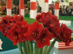 Photo by: Z. Gardening, Beauty, Irises, Hacks, Plants, Flowers, Hydroponics, Lawn And Garden, Beauty Illustration
