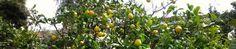 Club Networking Castellón | Nosotros movemos los arboles, tu recoges los frutos!!!!!!!!