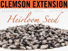 It's never too early to start planning your spring garden. Add a taste of the past to you garden with heirloom seeds from the South Carolina Crop Improvement Association.  Supplies for some varieties are very limited and we expect to sell out quickly. Check our web page for updates on availability.