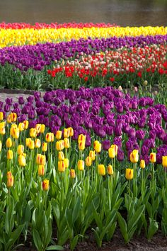 My favourite flower! I love the purple and yellow together!