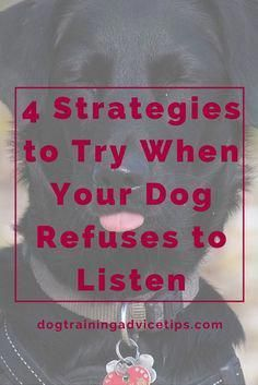 4 Strategies to Try When Your Dog Refuses to Listen Dog Training Tips Dog Obedience Training Dog Training Ideas Basic Dog Training, Puppy Training Tips, Potty Training, Training Schedule, Training Dogs, Training Online, Training Equipment, Training Videos, Off Leash Dog Training