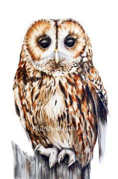 Tawny Owl Large fine art print watercolour от BlueShedStudio