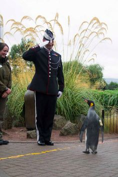 This Penguin Has Become A High-Ranking Officer Of The Norwegian Army