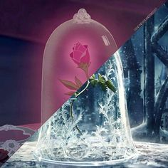 🌹🌹🌹 Credit: @disneyneverlandpixiedust  #beautyandthebeast #disneyprince #thebeast #batb #disneymovie #disneybeautyandthebeast #disney #belle #disneyprincess #lumiere #cogsworth #mrspotts #gaston #lefou #disneyworld #disneyland #chip #prince #princess #rose #princessbelle #princeadam #beourguest #plumette #cadenza #madamedegarderobe  @beautyandthebeast @disney Beauty And The Beast Crafts, Beauty And The Best, Disney Beauty And The Beast, Princess Belle, Disney Princess, Disney Belle, Prince Adam, Cogsworth, Glass Globe