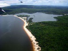 Amazônia: a floresta da vida!