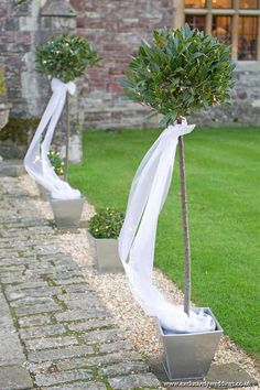 Rhinefield House Wedding Rhinefield House pathway, decorated with bay trees, bushes and fairy lights Venue Dressing by Exclusively Weddings. Photo by Martin Bell