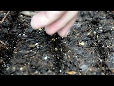 Autumn & Winter Garden Seed Starting  The time has come to get your last batch of greens and root crops in the ground before old Jack Frost comes around again. Here is what we recommend you try: https://www.youtube.com/watch?v=wwO4tLpGwMk