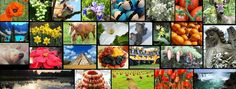 Free Tiiu Pix - High resolution photo images in many categories for FREE download.