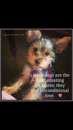 If you own a Yorkie you know this is true!