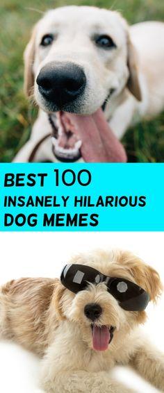 Dog Memes and Funny Humor Pictures chihuahua Hundemem und lustige Spaß-Bilder Chihuahua Memes About Guys, Funny Dog Memes, Memes Humor, Jokes, Memes Spongebob, Boyfriend Memes, Funny Times, Bts, Relationship Memes