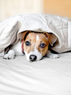 31 Problems Only Dog Owners Understand.  This looks like our bed hog.  Dogs rule.  Literally.