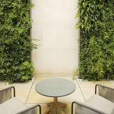 A living wall makes a dramatic vertical garden.