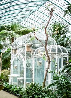 Greenhouse aviary