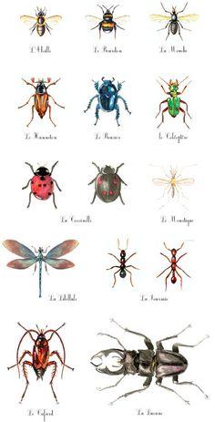 insectes                                                                                                                                                      Plus