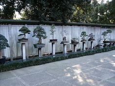 Huntington Library Japanese Bonsai Garden 0086 by DominusVobiscum, via Flickr