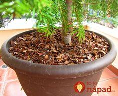 šušky z lesa ako mulč Pine Cones, Rustic, Ale, Garden Decorations, Plants, Cover, Ale Beer, Retro, Yard Decorations