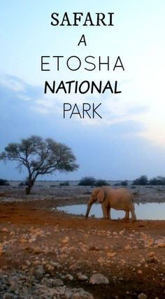 The Path She Took | Safari à Etosha National Park | http://www.thepathshetook.com