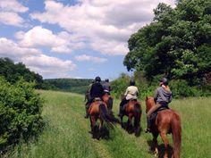 Urlaub für Reiter und Pferd - Wanderreiten mit eigenem Pferd im Harz - Angebote Trekking-Reiten für fortgeschrittene und ausdauernde Reiter. Trekkingritte in Deutschland durch den Harz.