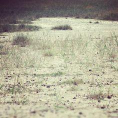 Szikes puszta a Kiskunságban #nature #puszta #steppe #pampa #grass #hungary #alfold #instahub #instamood #instagrammers #tweegram #webstagram #statigram #mik_nature #mik #earth #talaj #landscape #land – blogisztan az Instagramon Pampas Grass, Hungary, Land Scape, Nature Photography, Europe, Earth, Instagram, Pictures, Photos