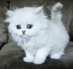 Cute Little Kittens, Cute Baby Cats, Cute Cats And Kittens, Cute Baby Animals, Kittens Cutest, Pretty Cats, Beautiful Cats, Animals Beautiful, Cat Bath