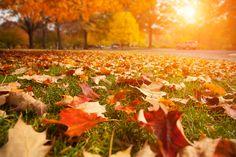 #OTOÑO Pumpkin, Table Decorations, Outdoor, Home Decor, Naturaleza, Photos, Outdoors, Decoration Home, Room Decor