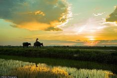 French photographer Réhahn moved to the city of Hoi An to pursue capturing the fascinating...
